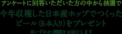 アンケートに回答いただいた方の中から抽選で今年収穫した日本産ホップでつくったビール(6本入り)をプレゼント ※いずれか1種類をお届けします